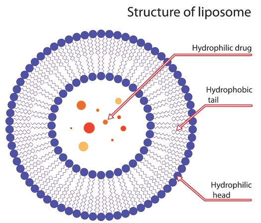 Liposomal Formulation Development